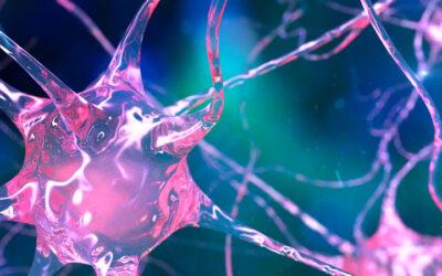 La importancia de la neurociencia en el estudio de la Experiencia de Usuario (UX) y los Factores Humanos (HF)